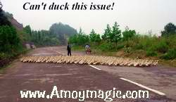 ducks covering the whole road