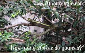 How many snakes do you see?  There are at least 4 in the photo.  Wuyi is the snake kingdom of the world.